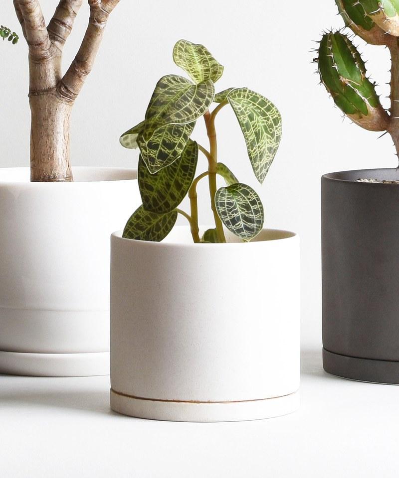 KNT9990 PLANT POT 191 陶瓷花盆 13.5cm